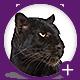 Jaguar Game Engine Addon - Riddles & Passwords - CodeCanyon Item for Sale
