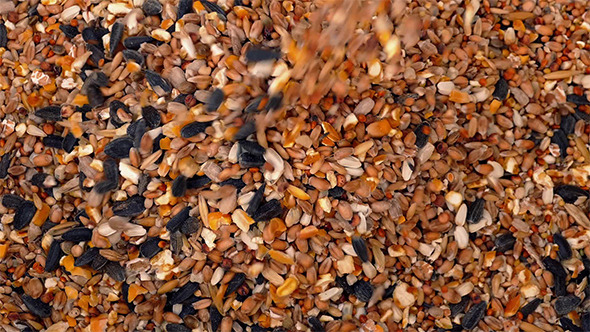VideoHive Pouring Grain And Seeds 10157317