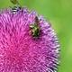 bees on flower spring season - PhotoDune Item for Sale