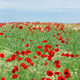 wild flowers meadow and blue sky landscape - PhotoDune Item for Sale
