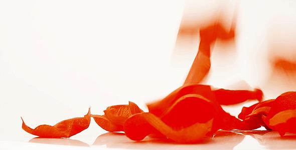 VideoHive Rose Petals Falling 10160452