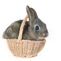 young rabbit - PhotoDune Item for Sale