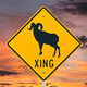 Big Horn Sheep Crossing Sign with Sunrise - PhotoDune Item for Sale