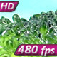 Green Broccoli Florets - VideoHive Item for Sale