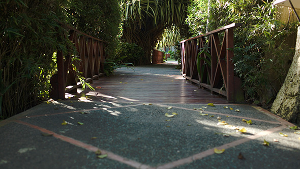 Crossing Wooden Bridge Among The Palm Branches