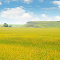 wheat field and blue sky - PhotoDune Item for Sale