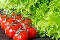 lettuce and tomatoes on wooden background - PhotoDune Item for Sale