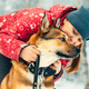 Girl Child and Dog hugging and playing Outdoor Lifestyle Friendship concept  - PhotoDune Item for Sale