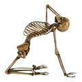 Human Skeleton  - PhotoDune Item for Sale