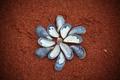 Shells - PhotoDune Item for Sale