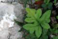 Fresh green leaves of a fern - PhotoDune Item for Sale