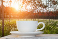 morning coffee and sunrise in the latex garden - PhotoDune Item for Sale