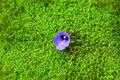 Purple wild flowers on the moss. - PhotoDune Item for Sale