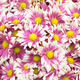 Colorful flower background - PhotoDune Item for Sale