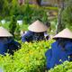 three Vietnamese women work in garden - PhotoDune Item for Sale