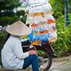 Vietnamese woman sells aquarian fish - PhotoDune Item for Sale