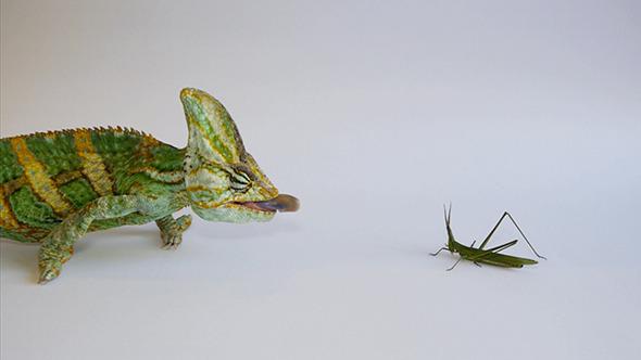 Chameleon Hunting 2