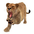 Angry Lioness  - PhotoDune Item for Sale