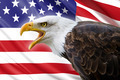 a beautiful bald eagle with a background of a usa flag - PhotoDune Item for Sale