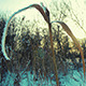 Winter Grass 3 - VideoHive Item for Sale