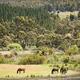Rural Farmland - PhotoDune Item for Sale