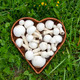 white wild  mushrooms champignons in basket on grass - PhotoDune Item for Sale