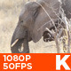 African Elephant Eating 02 - VideoHive Item for Sale