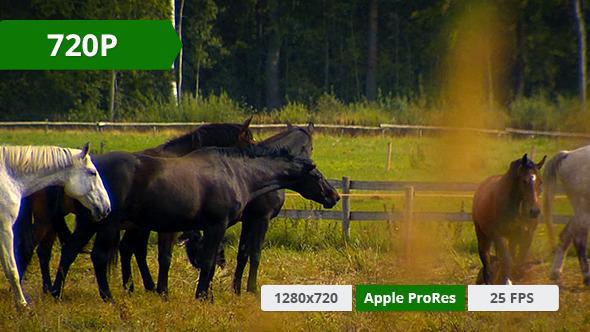 Horse in a Field 5