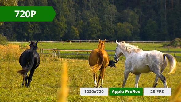 Horse in a Field 8