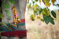 buddhist sacred tree - PhotoDune Item for Sale