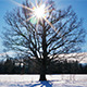 Shoot Of Winter Lonely Tree And Moving Sun - VideoHive Item for Sale
