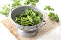 fresh curly kale in a colander - PhotoDune Item for Sale