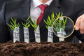 Businessman Holding Magnifying Glass In Front Of Money Plants - PhotoDune Item for Sale