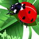 St. Patrick Day Three Leafed Clover and Ladybug  - GraphicRiver Item for Sale