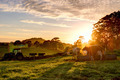 Sunrise on the farm - PhotoDune Item for Sale