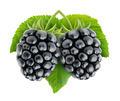 Blackberries - PhotoDune Item for Sale