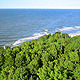 Tree & Sea, Landscape - VideoHive Item for Sale