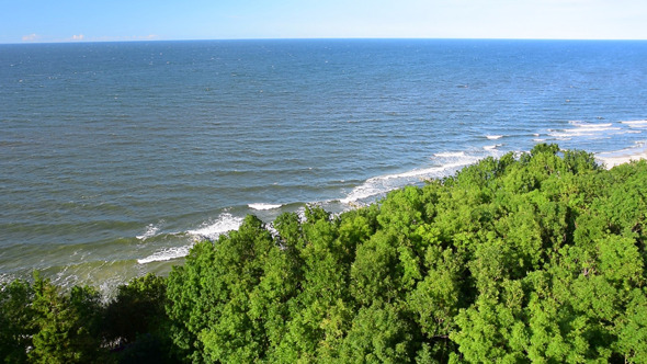 Tree & Sea Landscape