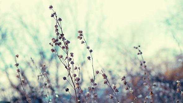 Winter Grass 8
