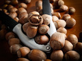 Hazelnuts and tool - PhotoDune Item for Sale