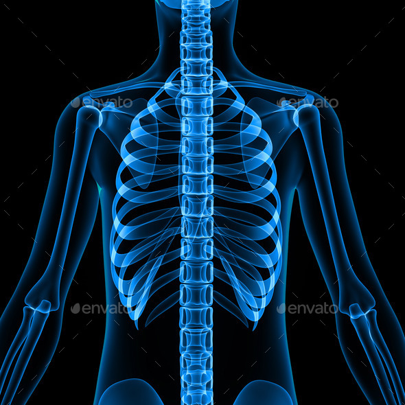 Body with Skeleton Ribs