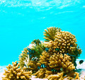 Coral reef at Maldives - PhotoDune Item for Sale