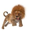 Hunting Lion  - PhotoDune Item for Sale