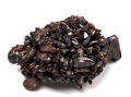 Rapana venosa completely covered with mussels - PhotoDune Item for Sale