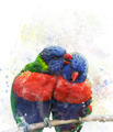 Rainbow Lorikeet Parrots - PhotoDune Item for Sale