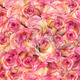 Roses Background - PhotoDune Item for Sale