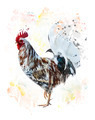 Colorful Rooster - PhotoDune Item for Sale