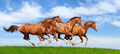 Herd Gallops - PhotoDune Item for Sale