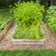 Vegetable garden in raised boxes - PhotoDune Item for Sale