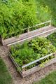 Vegetable garden in raised boxes - PhotoDune Item for Sale
